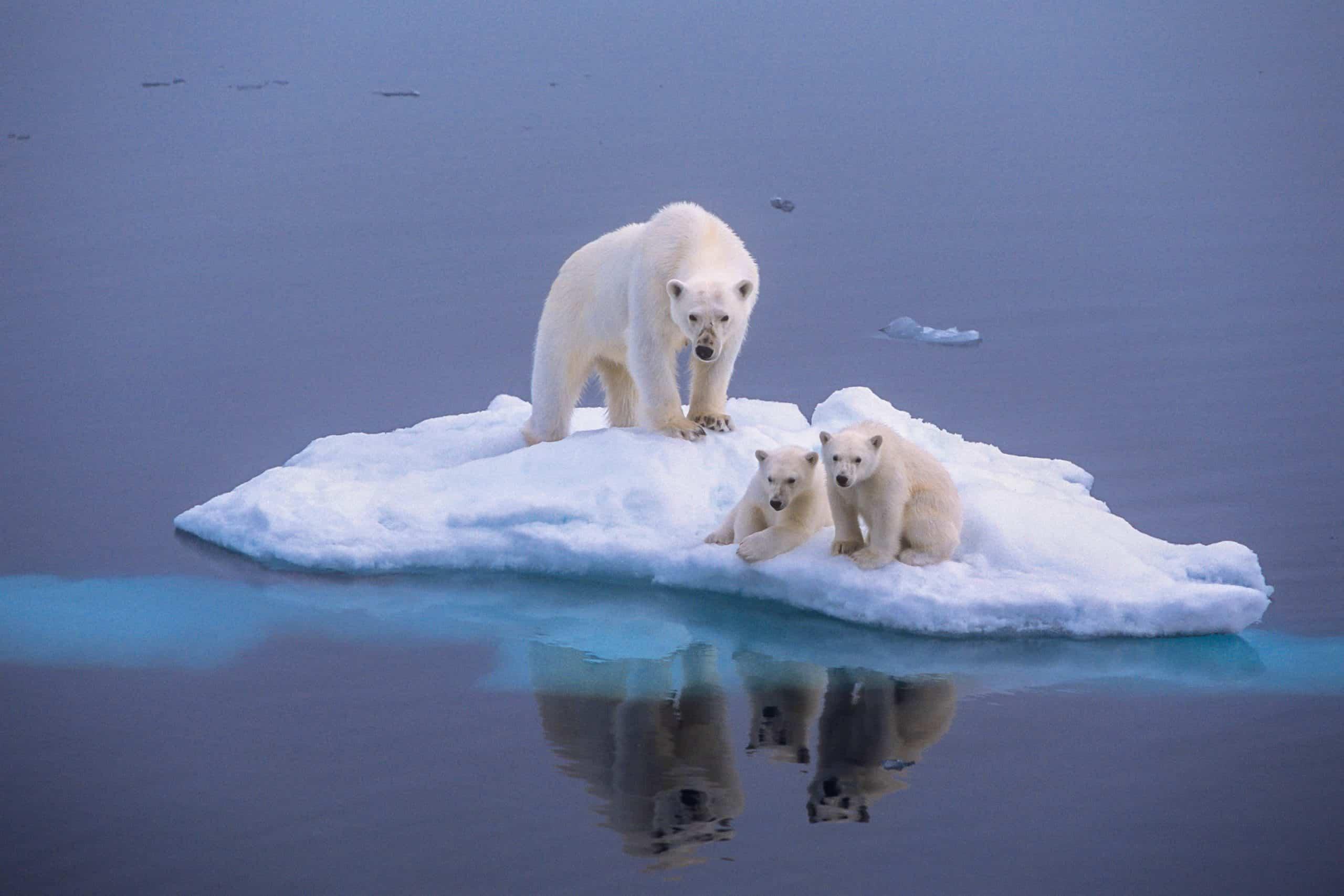 Keep them on ice