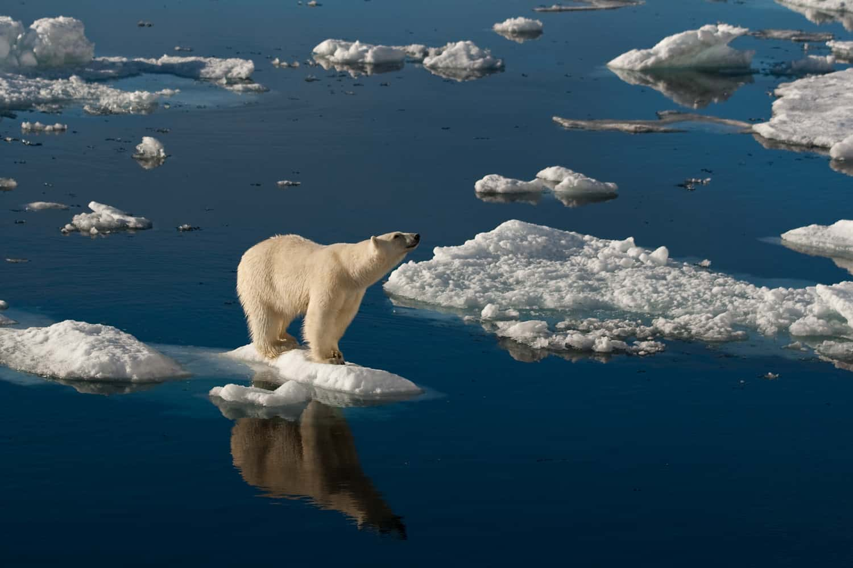 Polar bears Spitsbergen (18)