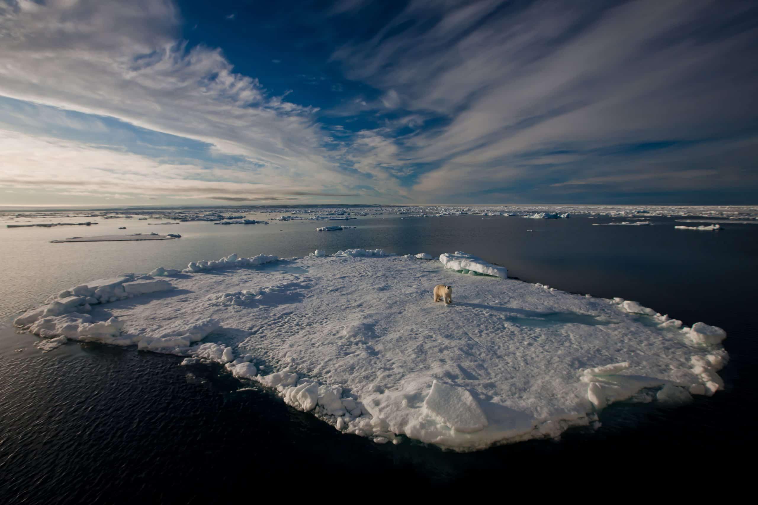 Polar bears Spitsbergen (6)