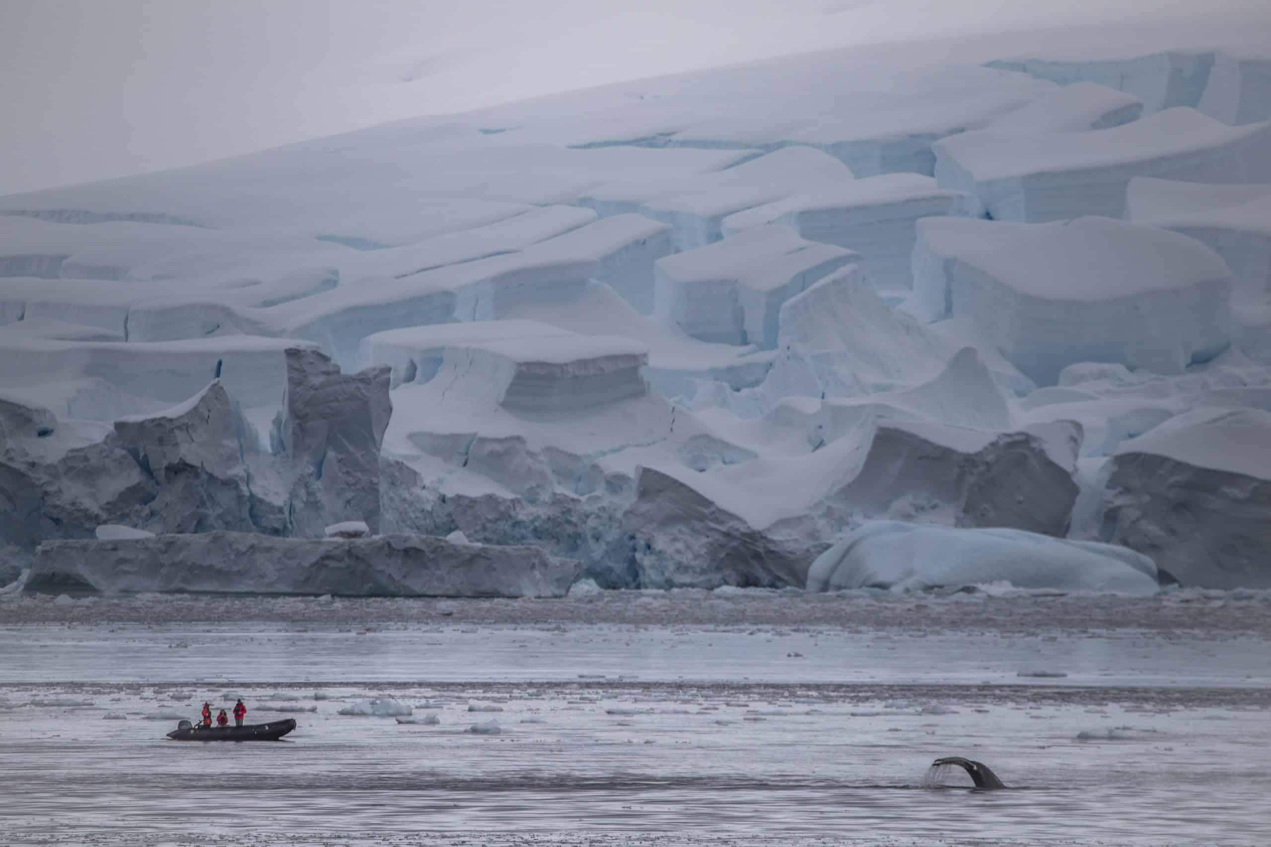 Antarctic-Humpbacks-2-scaled