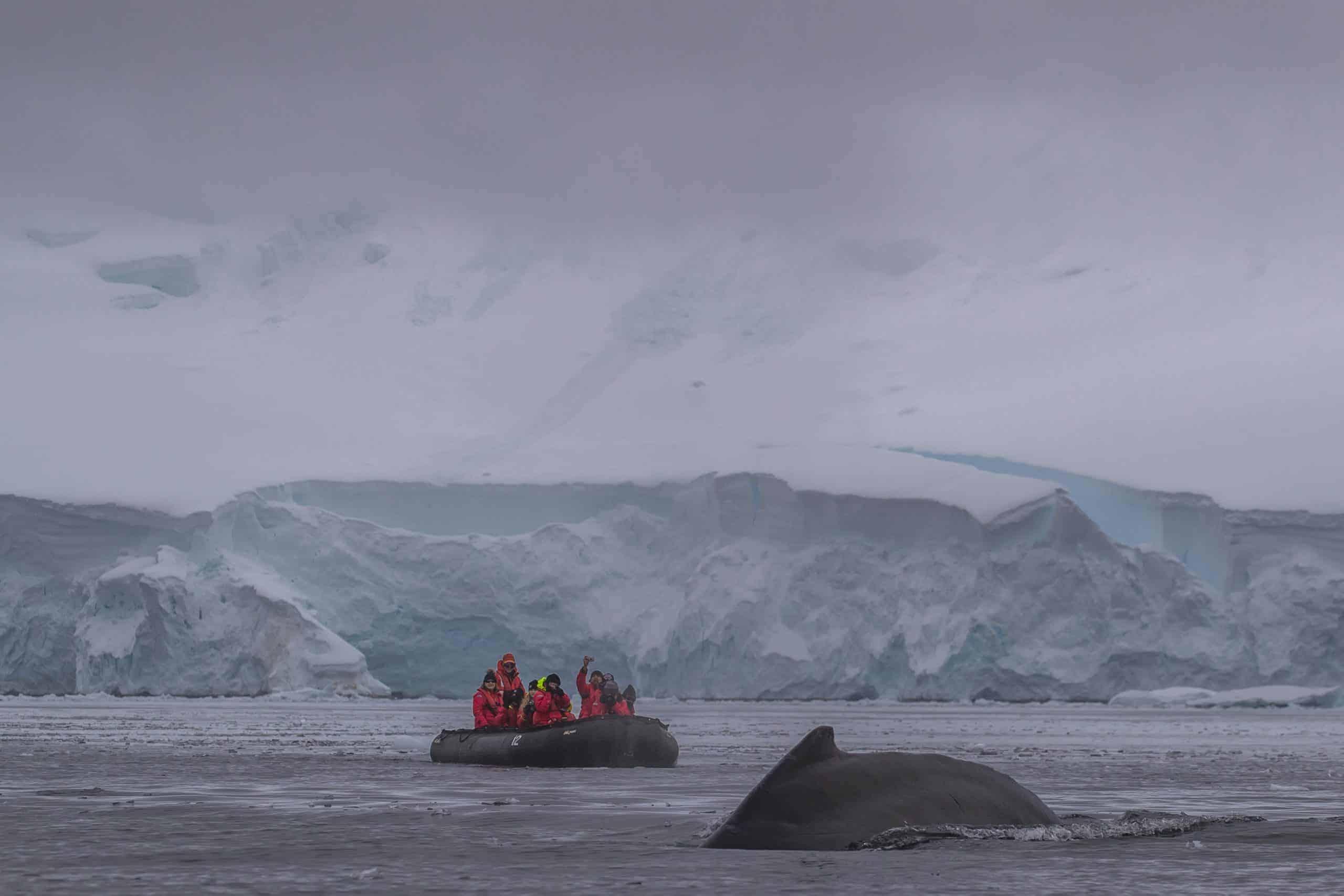 Antarctic-Humpbacks-3-scaled