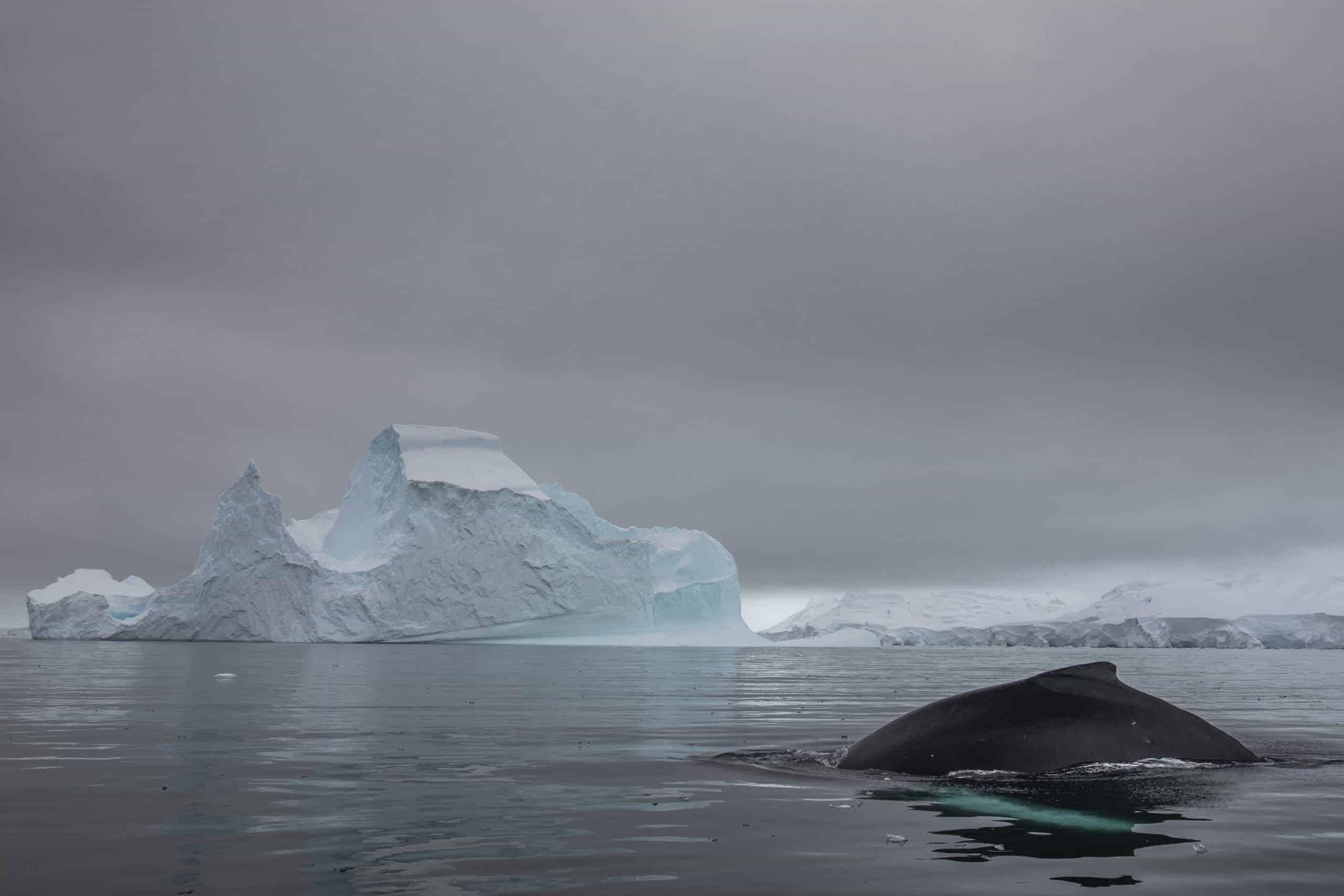 Antarctic-Humpbacks-7-scaled
